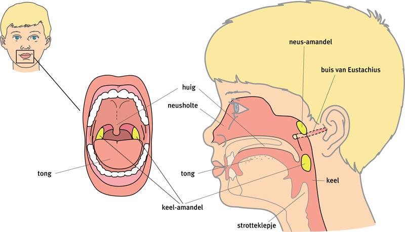 pijn in keel en oor bij slikken