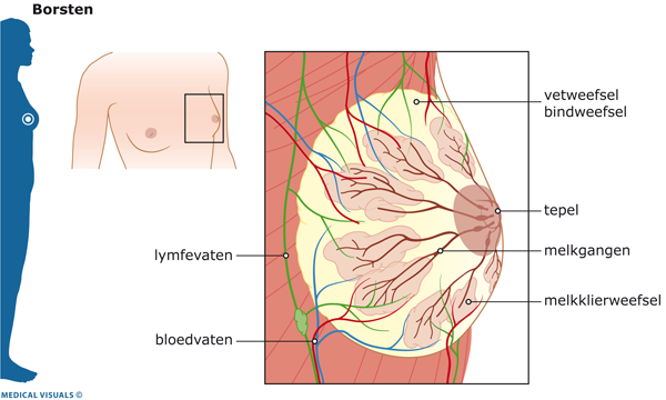 pijnlijke borsten menstruatie