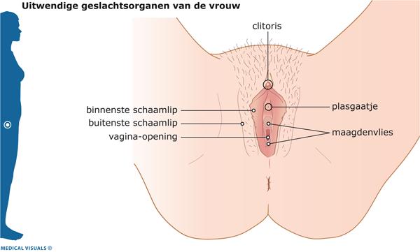 Jeukende schaam lippen zwanger