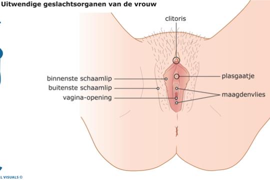uitwendige geslachtsorganen vrouw